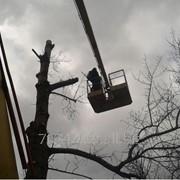 Спиливание деревьев с автовышки частями фото