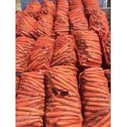 Морковь голландских сортов фото