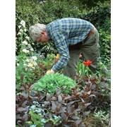Садовник-агроном, садовник-специалист, садовник-дворник фото