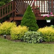 Услуги посадки эксклюзивных растений фото