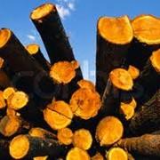 Сбор дикорастущих и недревесных лесопродуктов фото