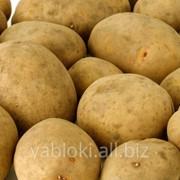 Продам Картофель из Молдавии