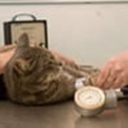 Лабораторные ветеринарные исследования фото