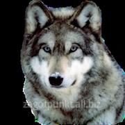 Мех волка фото