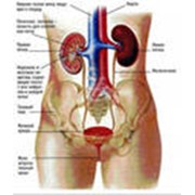 Лечение заболеваний мочеиспускательного канала фото