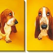 Модульная картина Собака , Неизвестен фото