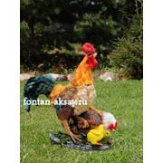 Петух с курицей и цыплятами фото