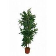 Искусственное дерево Бамбук Дайнис (Код товара: 55755) фото