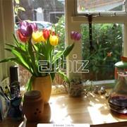 Подоконники меламиновые, Окна, двери, перегородки фото