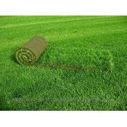 Рулонный газон.Доставка,укладка.Крым,Севастополь