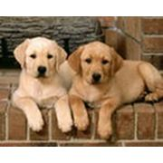 Медицинское и ветеринарное страхование собак и кошек