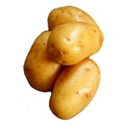 Семенное хозяйство реализует картофель элитных сортов Свитанок Киевский фото