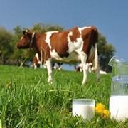 Молоко коровье, 1 л Молоко коровье, 1 л фото