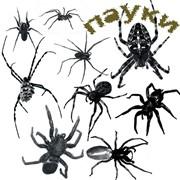 Дезинсекция от пауков и комаров фото