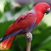 Благородные попугаи фото