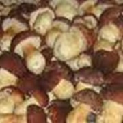 Переработка грибов фото