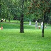 Травосмесь «Парковая» фото