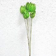 Страмониум зеленое яблоко (5) фото