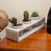 Цветочные горшки для кактуса фото
