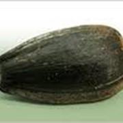 Очистка семян подсолнечника фото