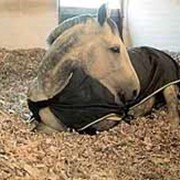 Подстилка для лошади фото