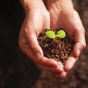 Продажа саженцов садовых растений фото