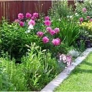 Услуга подбора растений для сада фото