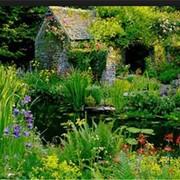 Озеленение сада. Благоустройство сада. Ландшафтный дизайн. Ландшафтный дизайн сада фото