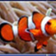 Гарантия на обитателей аквариума фото