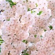 Природа (зима, весна, лето, осень) фото