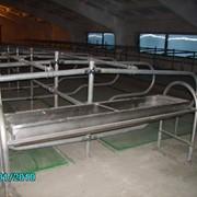 Групповые поилки для коров с подогревом фото