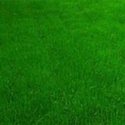 Рулонный газон в Херсоне фото
