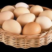 Яйца куриные деревенские фото
