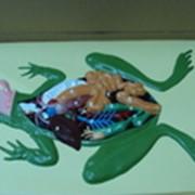Барельефная модель лягушки фото