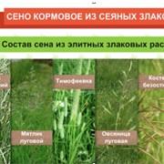 Сено кормовое посевное зеленое 1 класс сертифицированное фото