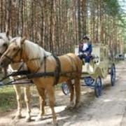 Конные экипажи в Москве фото