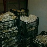 Сдам в аренду действующий цех по производству грибов фото