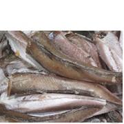 Рыба Хек 300-500 фото