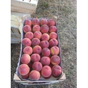Молдавский персик фото