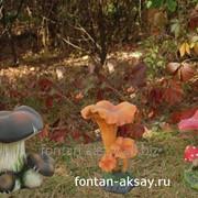 Лесной гриб фото