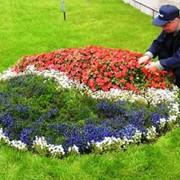 Уход за цветниками (прополка, подкормка) фото