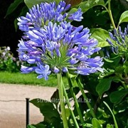 Устройство цветников и клумб №41 фото