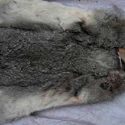 Натуральный мех кролика шиншиллы