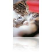 Терапевтическое лечение кошек фото