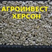 Семечки очищенные, купить в Украине фото