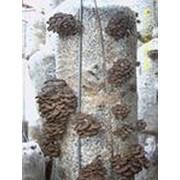 Грибные блоки,мицелий вешенки фото
