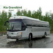 Заказ, аренда автобуса KIA.Granbird 45мест фото