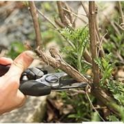 Обрезка садовых деревьев фото