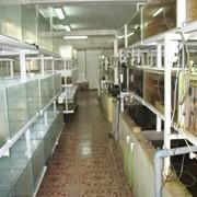 Товары для аквариума фото