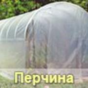 Парник Перчина, Каркасы парников фото